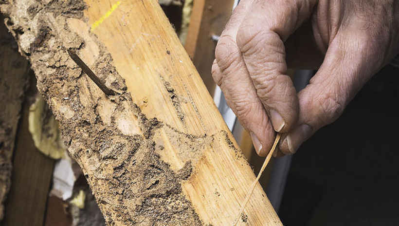 Пораженная древесина